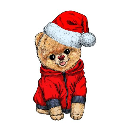 Pomeranian toy dig dressed in red hoodie and santa hat, hand drawn vector illustration. Christmas cute character.
