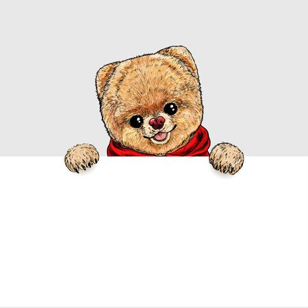 Pomeranian toy dog dressed in red hoodie, holding white banner in his paws. Hand drawn vector illustration.  イラスト・ベクター素材