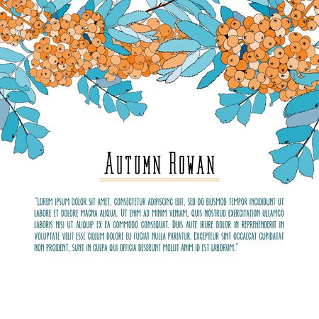 Rowan-berry background for text, blue and orange  イラスト・ベクター素材