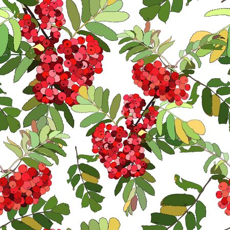 Beautiful color seamless pattern with red berries
