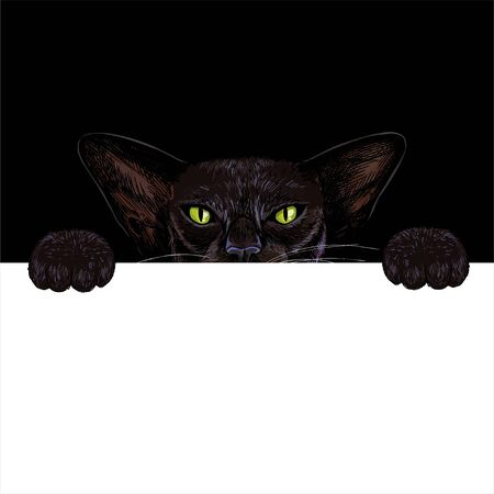 Black oriental cat holding white paper banner
