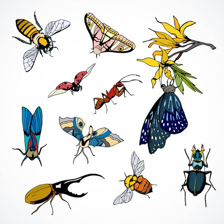 set of vector insects colored hand drawn image