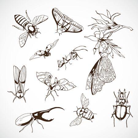 Insect Set, hand Drawn black vector illustration