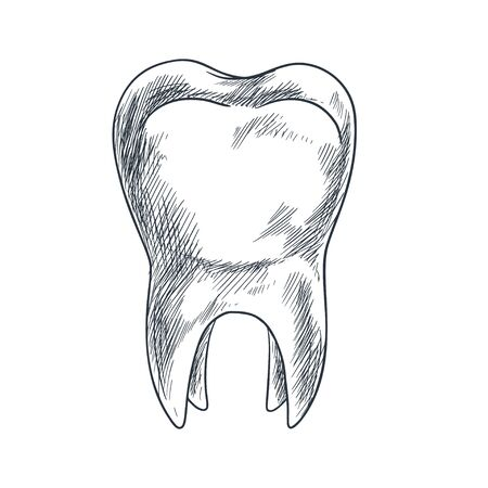 Hand drawn tooth with roots, sketchy style Stockfoto - 134877850