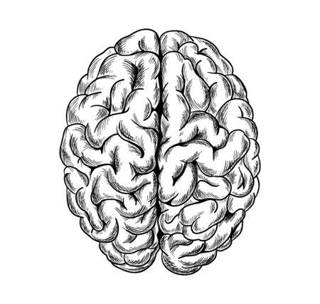 Human brain, top view, hand drawn sketchy vector