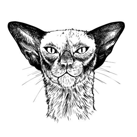Portrait of the oriental cat, hand drawn vector Ilustracja