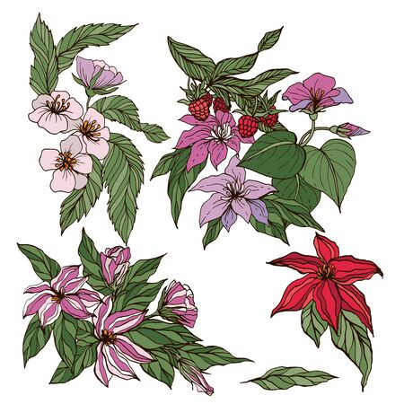 Vector collection of hand drawn flowers, berries