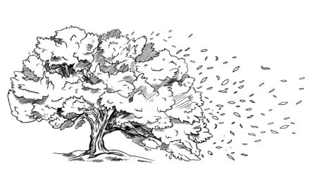 Spreading tree on the wind, leaves are flowing Ilustracja