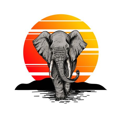 Bic elephant, front view, sunset on the background Illustration