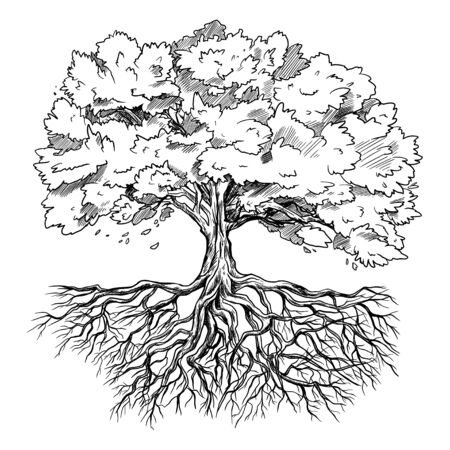 Spreading tree with leaves and rootage, hand drawn sketch, vector illustration Stock Illustratie