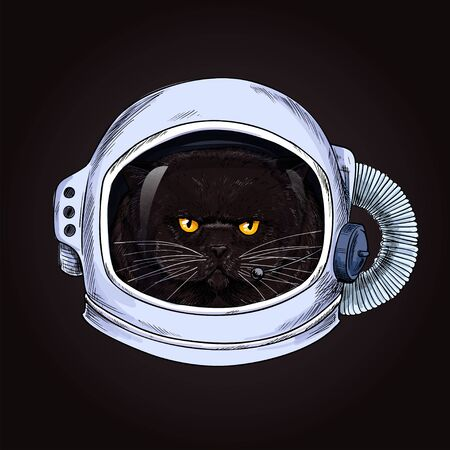 Grumpy fat cat face in a space helmet