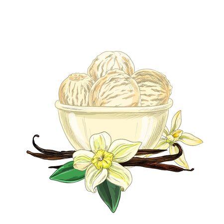 Un bol avec de la crème glacée, des fleurs de vanille et des haricots sont ci-dessous, un croquis en couleur, une illustration vectorielle dessinée à la main