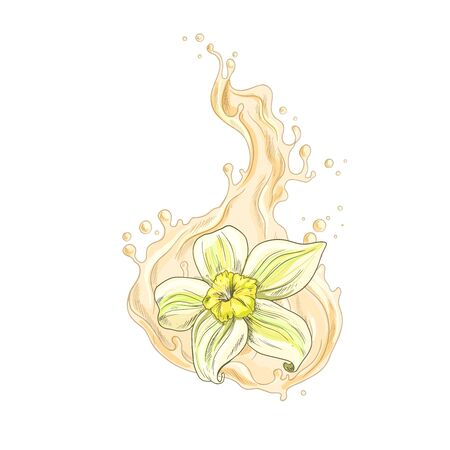 Vanilla flower falling into the creamy liquid with splash, full color isolated hand drawn vector illustration