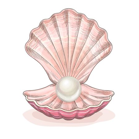 White pearl in the opened clam, pink seashell