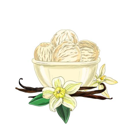 Bowl with ice cream, vanilla flowers and beans are below, full color sketch, hand drawn vector illustration