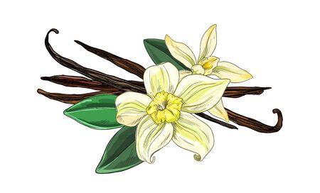 Vanilleschoten mit Blüten und Blättern, vollfarbig Vektorgrafik
