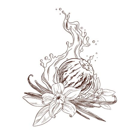 Vanilla flowers, beans, ice cream and cream Stock Vector - 137332553