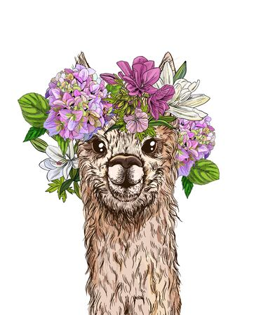 Cute alpaca with flower wreath on its head, full color sketch, hand drawn vector illustration