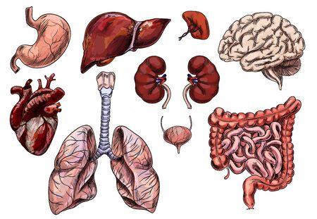 Satz menschlicher Organe, handgezeichnete Skizze