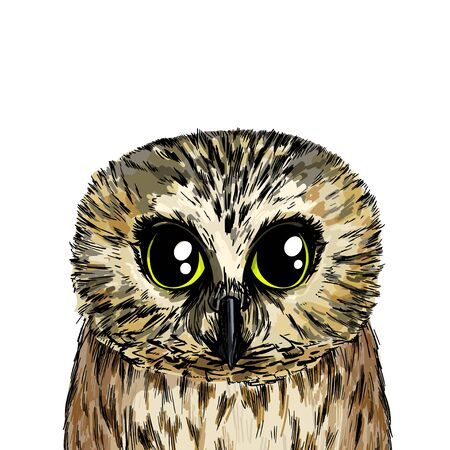 Cute owl portrait, full color sketch, hand drawn vector illustration