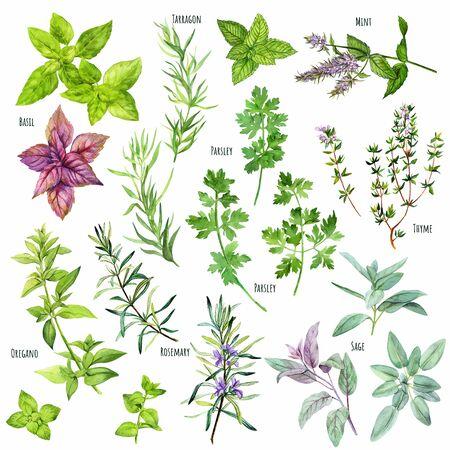 Set di erbe da cucina ad acquerello, cucina mediterranea, illustrazione vettoriale disegnata a mano