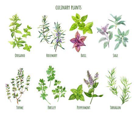 Set di erbe da cucina ad acquerello, cucina mediterranea, illustrazione vettoriale disegnata a mano Vettoriali