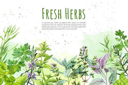 Sfondo Watercolkor con erbe e piante culinarie, illustrazione vettoriale disegnata a mano Vettoriali