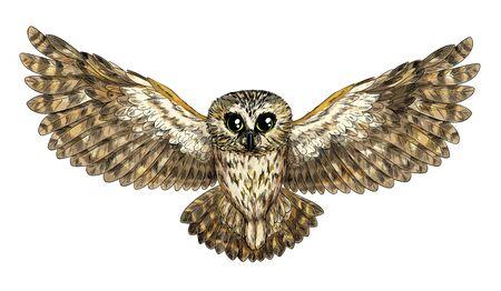 Cute flying owl, full color sketch, hand drawn