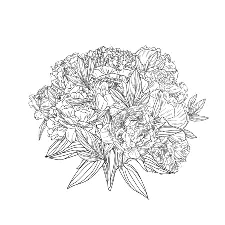 Pink peonies bouquet, ink realistic sketch, hand drawn vector illustration