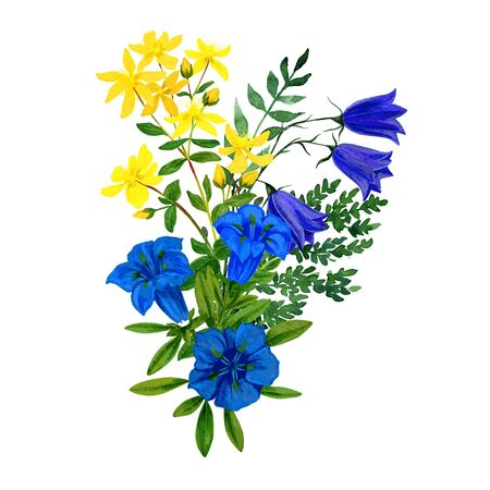 Wild flowers bouquet, blue and yellow tints, st. johns wort gentian