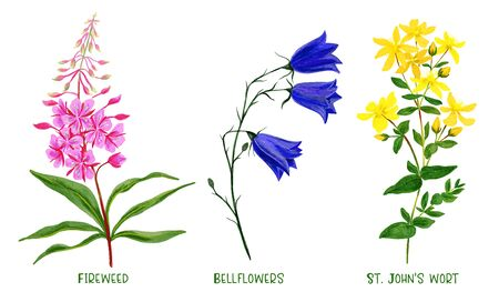 Wild field plants and flowers set, hand drawn watercolor