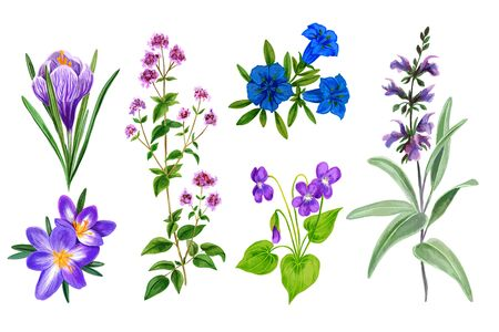 Set of wild field flowers and herbs, watercolor