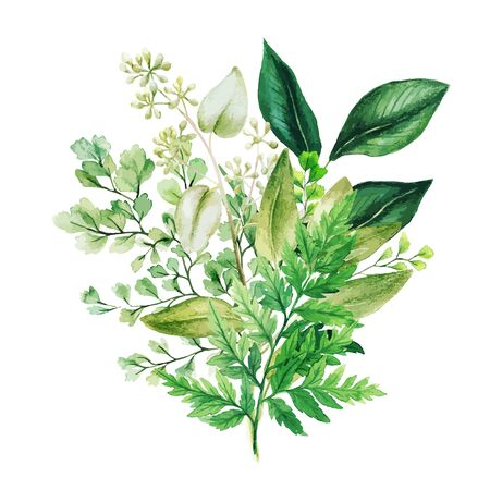 Herbal watercolor bouquet with ferns and adiantum, hand drawn vector watercolor illustration