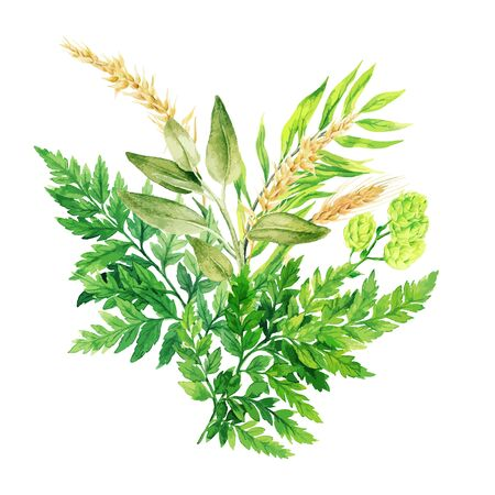 Herbal watercolor bouquet with ferns and ears, hand drawn vector watercolor illustration