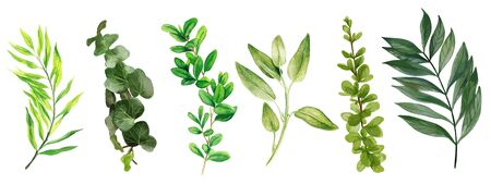Wild leaves and bindweed, Watercolor bright greenery collection