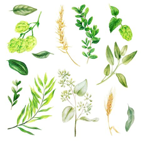Hops and ears, leaves and branches, Watercolor bright greenery collection, hand drawn illustration.