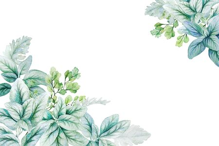 Watercolor lamb ear leaves and silver leaves, corner frame Banque d'images