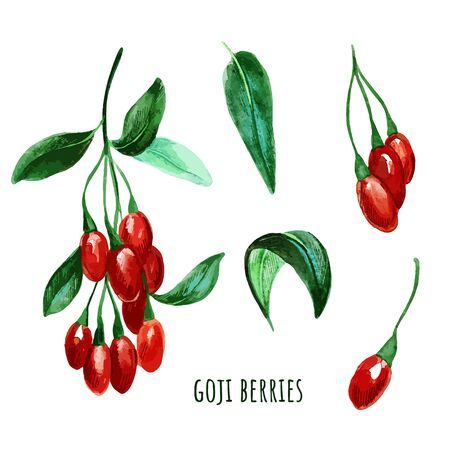 Goji berries with leaves. Hand drawn watercolor