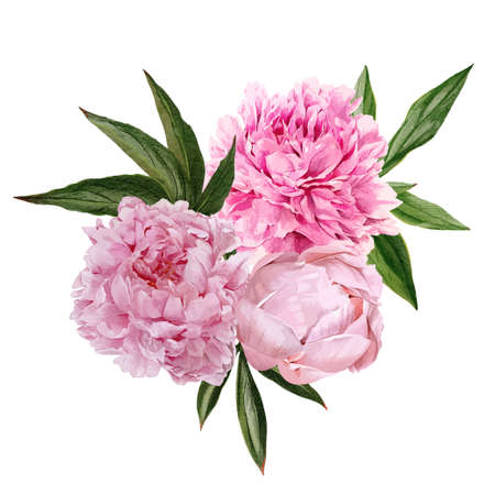 Lush pink peonies bouquet with leaves, hand drawn