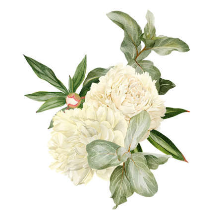 White peonies, leaves and Elaeagnus, hand drawn