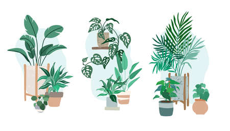 Three compositions made with potted house plants