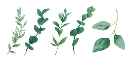 Cool greenery elements collection with five leaves