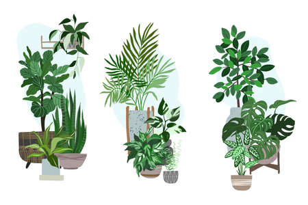 Three house plants sets, potted tropical plants