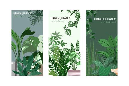 Set of three card templates with indoor plants illustration Ilustración de vector