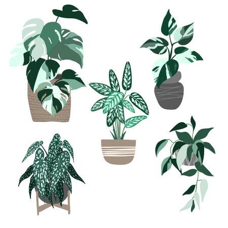 Set of five variegated house plants in pots illustration Ilustración de vector