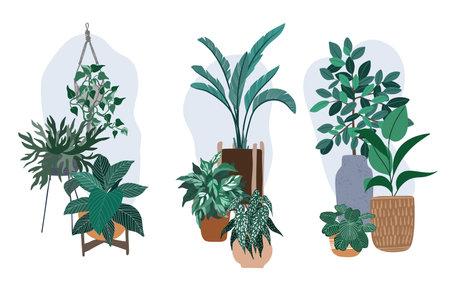 Three house plants compositions, plants in pots illustration Ilustración de vector