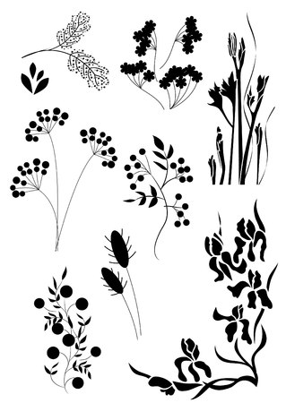 wild berry:   Floral tatoo Illustration