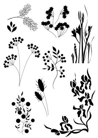 black berry:   Floral tatoo Illustration