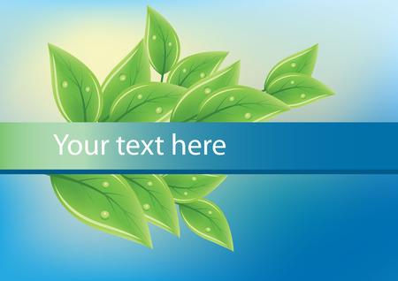 green tea leaf: Green fresh leaves on blue background