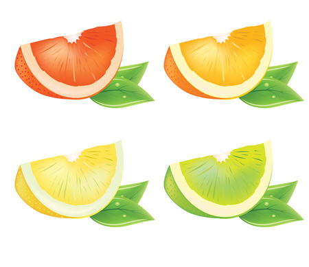 lobule: Realistic vector piece of citrus with fresh leaves